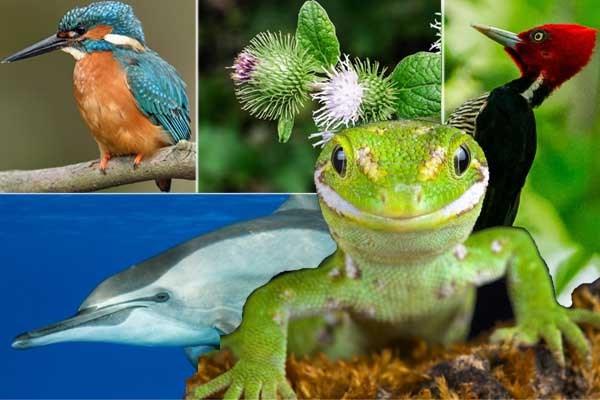 De beste ideeën hebben we gepikt van de natuur: deze handige oplossingen vonden we dankzij planten en dieren