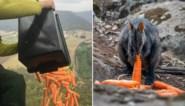 Na het vuur kwam de hongersnood: Australië zet helikopters met voedselpakketten in voor dieren