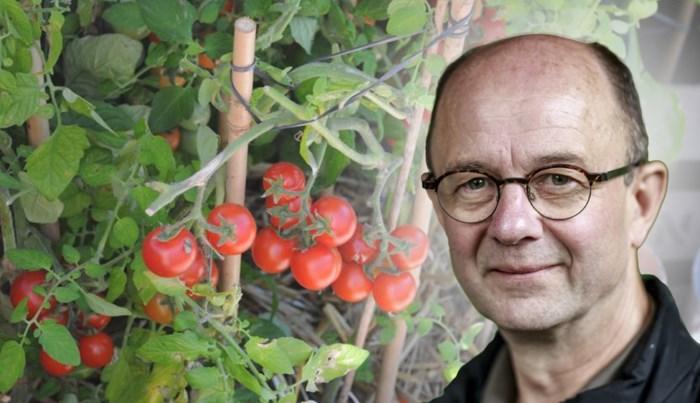 Zeven tips voor een eigen moestuin, zelfs als je geen tuin hebt