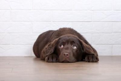 Ook onze huisdieren zijn van slag door de coronacrisis