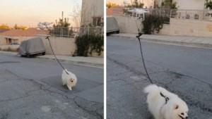 In quarantaine en toch je hond willen uitlaten? Dit baasje heeft er dé oplossing voor