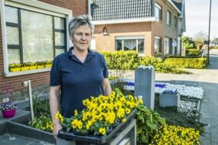 """Duizenden viooltjes kleuren straat: """"Bestel bloemen voor je tuin alstublieft online"""""""