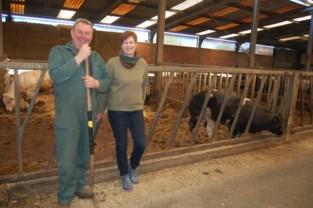 """Ook Beveren sluit de grenzen en dat is vooral voor de boeren lastig: """"Onze dieren maken geen onderscheid tussen Nederlandse of Belgische grond"""""""