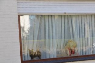 FOTO. Knuffels tegen corona, werkgroep haalt berenkaart offline