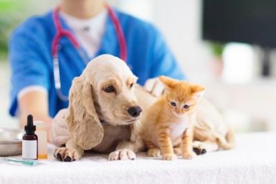 """Tips tegen coronastress voor je huisdier: """"Laat katten in hun wereld en hou de routine aan voor je hond"""""""