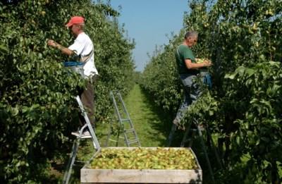 Corona vertraagt export fruit, maar verkoop hier doet het goed dankzij het hamsteren