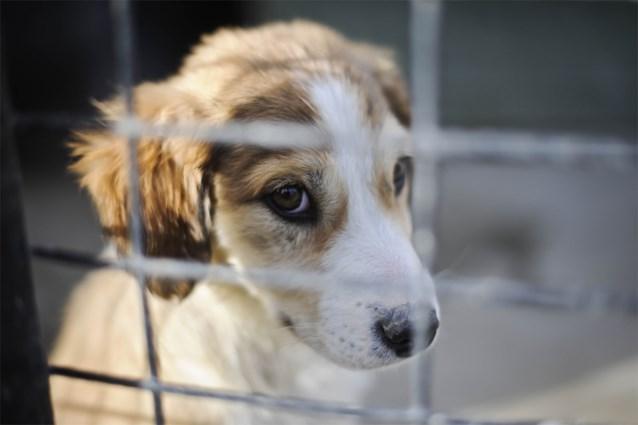 """Dieren adopteren uit het asiel blijft mogelijk: """"Anders grote gevolgen voor de asielen"""""""