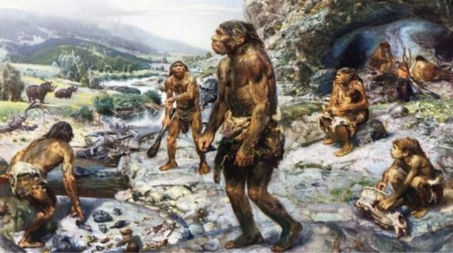 Neanderthalers aten mosselen en zeehond