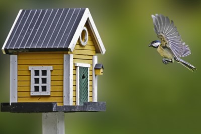 Ons leven ligt stil, maar in de tuin komt het net op gang: zo gaat het eraan toe in het nestkastje