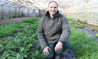 """Stormloop bij boer Dirk sinds uitbraak corona: """"Plots wil iedereen groenten van bij de boer"""""""