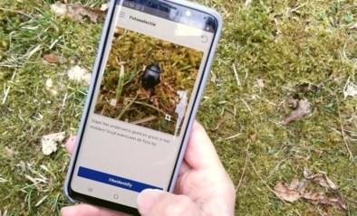 Op ontdekkingstocht in je eigen achtertuin: nieuwe app Natuurpunt herkent bijna 15.000 planten en dieren