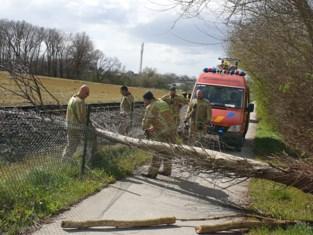 Omgewaaide boom verspert spoorlijn en fietspad