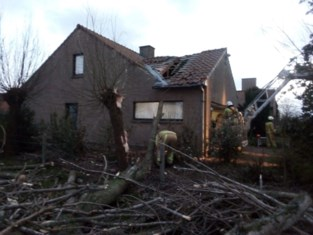 Rukwind blaast grote boom op dak villa: schade aan dak is groot