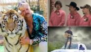 Een sekssekte in de zoo, verbrande alligators en een absurde videoclip over een vermiste: het verhaal van Joe Exotic is zo gek dat het wel waar moet zijn