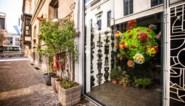 """Bloemist hangt 'bloemenvirus' van anderhalve meter groot in etalage: """"Mensen hebben nood aan schoonheid in deze tijden"""""""