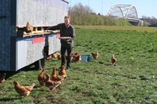 """Wannes (25) start bioboerderij in stadsomgeving, inclusief mobiel kippenhok: """"Een jongensdroom die in vervulling gaat"""""""