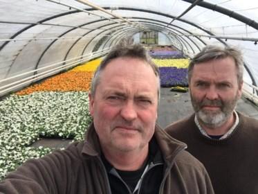"""Honderdduizenden bloemen gaan aan dumpingprijzen de deur uit: """"In één klap de ene annulatie na de andere. Rampzalig"""""""