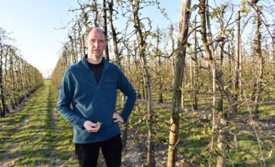 """Fruitkweker vreest gevolgen nachtvorst: """"Tot helft minder appelen aan bomen"""""""