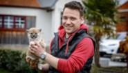 """Bij hondenkweker Wannes staat de telefoon roodgloeiend: """"Mensen hebben nu echt tijd en zin om te wandelen, dus willen ze allemaal een hond"""""""