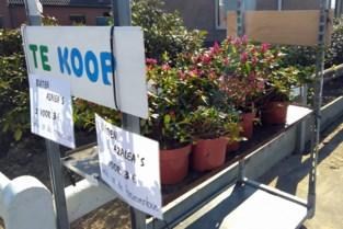 Pop-up kraampjes met azalea's verdwijnen... omdat het federaal niet mag