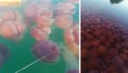 Prachtig maar glibberig natuurfenomeen gefilmd voor Filipijnse kust