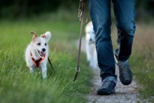 Buurtbewoners vragen meer controle op loslopende honden in Kluisbos