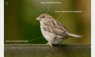 'Huismussen' gezocht om huismussen in eigen tuin te tellen