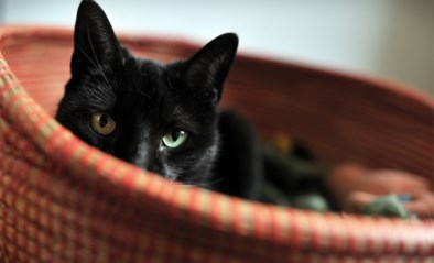 Blijf in je hok, geldt dat ook voor hen?: GAIA overstelpt met vragen over huisdieren