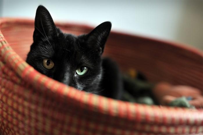 BEANTWOORD. Mag mijn kat nog bij mij slapen? Mag ik nog naar hondenweide? En naar dierenarts?