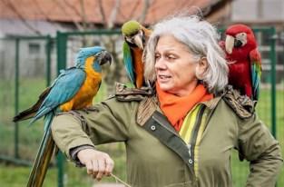 Papegaaien krijgen nieuwe thuis