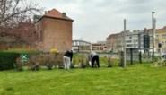 Gedetineerden onderhouden tuin rusthuis