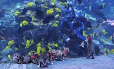 Na pinguïns en zeeleeuwen mogen nu kittens de onderwaterwereld verkennen