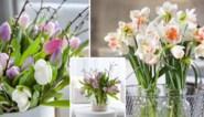 Maak zelf makkelijk plantenvoeding en zeven andere tips om lang te genieten van snijbloemen