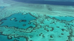 23-jarige parkwachter doodgebeten door haai in Great Barrier Reef