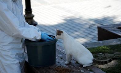 """Ook kat moet in quarantaine als baasje ziek is: """"We raden zelfs aan om hem in een aparte ruimte te plaatsen"""""""