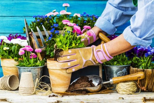 Dit is het moment om je kamerplanten te verpotten: zo doe je het goed