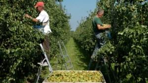 Gezocht: 25.000 seizoensarbeiders