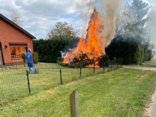 Struik gaat in vlammen op tijdens wegbranden van onkruid in Lummen