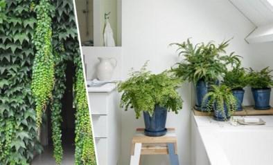 Van een enkel plantje tot een groen douchegordijn: deze planten voelen zich als een vis in het water in je badkamer