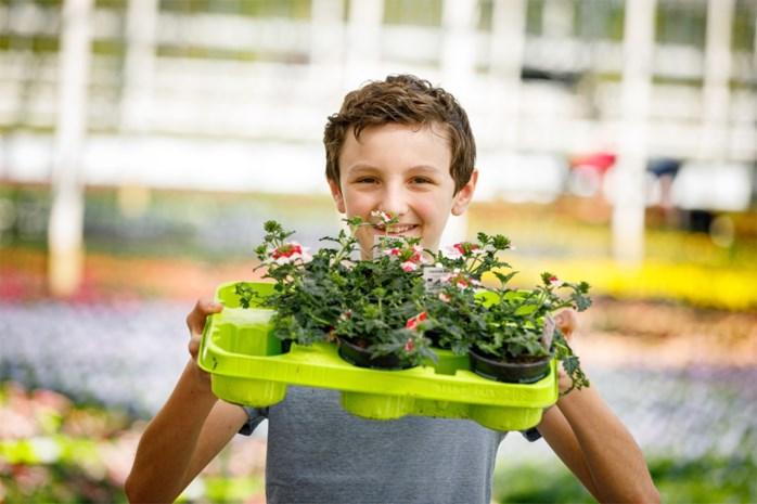 """Thorben (12) maakt webplatform voor plantenverkopers die afstevenen op gigantisch verlies: """"Nu al 4.500 likes"""""""