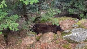 De berenkoning is dood, leve de berenkoning: Frankrijk in de ban van fatale machtsstrijd in de Pyreneeën