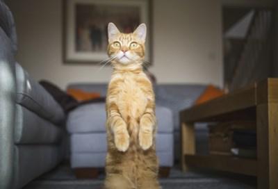 Ergeren katten zich nu we constant thuis zijn? Neen, integendeel zelfs