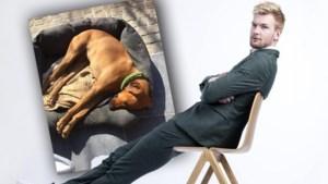 """Ruben Van Gucht zegt al drie jaar slaapwel tegen overleden hond: """"Op een vreselijke manier van ons weggerukt"""""""