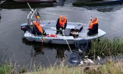 Vervuiling met bietenpulp dreigt Schelde ook bij ons te vervuilen