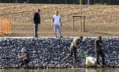 """Vissen in Schelde sterven bij bosjes door dijkbreuk: """"Kan de komende jaren al het waterleven doden"""""""