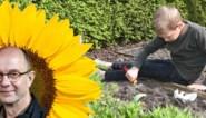 Organiseer een groeiwedstrijd en meet de zonnebloemen: zo krijgen ook je kinderen interesse in de eigen tuin