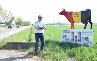 Bekende koe aan gewestweg moet weg: