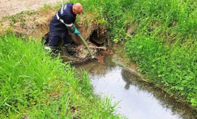 Wermerbosbeek al voor derde keer vervuild met stookolie