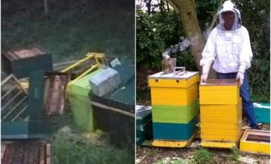 """Vandalen vernielen bijenkasten: """"Honderden bijen gedood en 50 kilo honing voor de vuilbak """""""