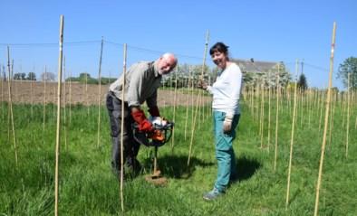 Over vier jaar wijn van Atomse bodem: Terroir Terwaer